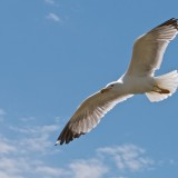 Eleganter Flieger